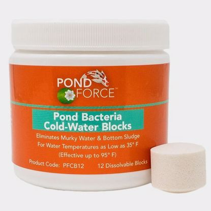 Pond Bacteria Coldwater Blocks 12
